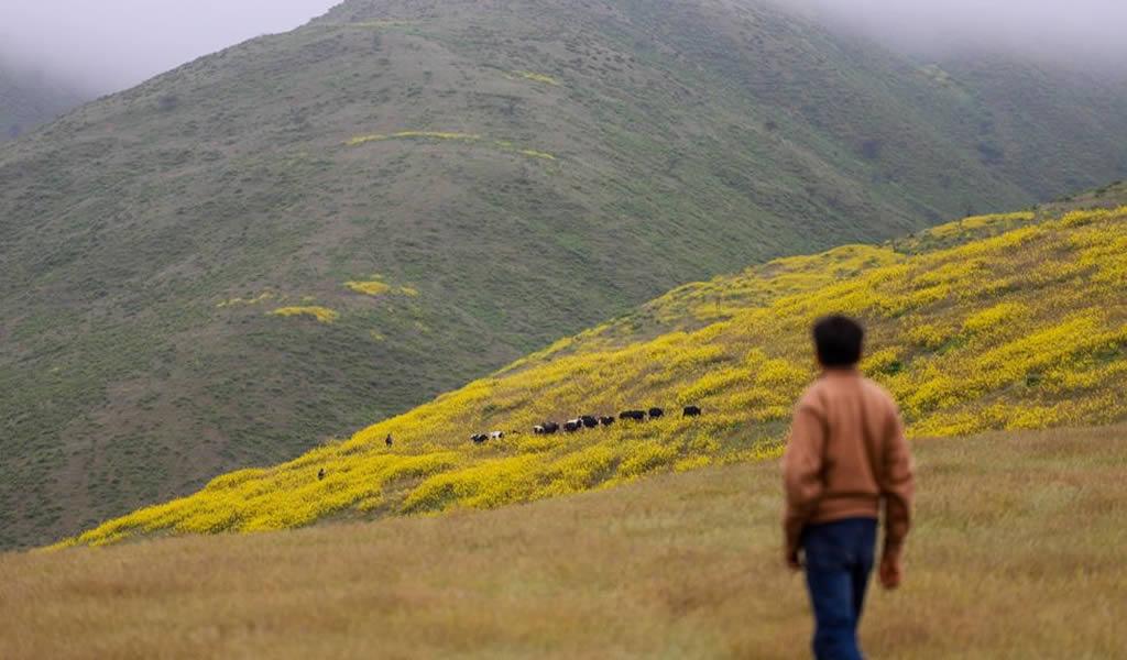 Southern indica que no devolverá Lomas de Cachendo a Gobierno Regional de Arequipa