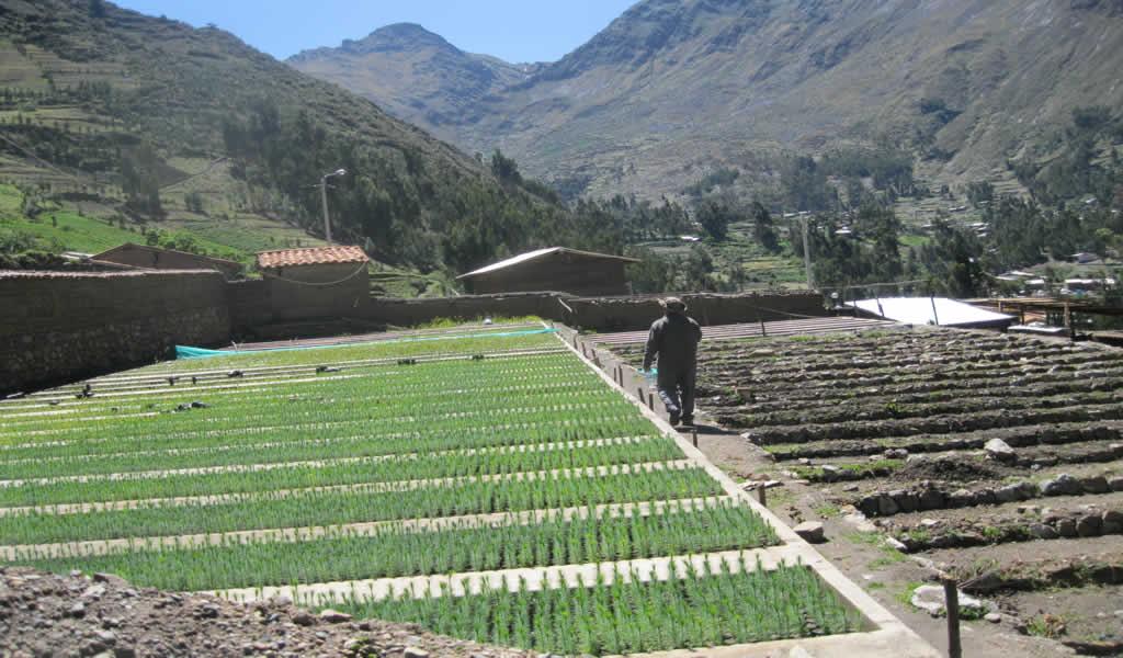 Áncash: Antamina impulsa proyectos de riego para agricultura a través de OxI